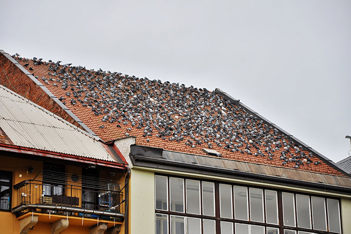 A2B Pest Control are able to install spikes to deter birds from roofs in Hackney.