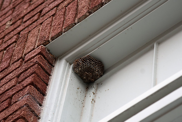 We provide a wasp nest removal service for domestic and commercial properties in Hackney.